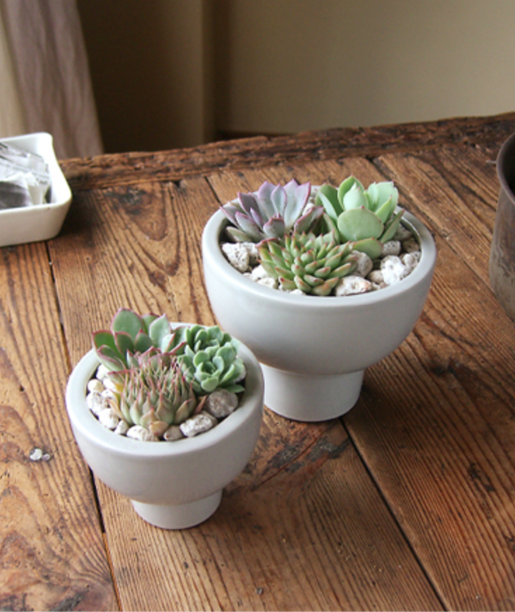 succulents_arrange_8_1