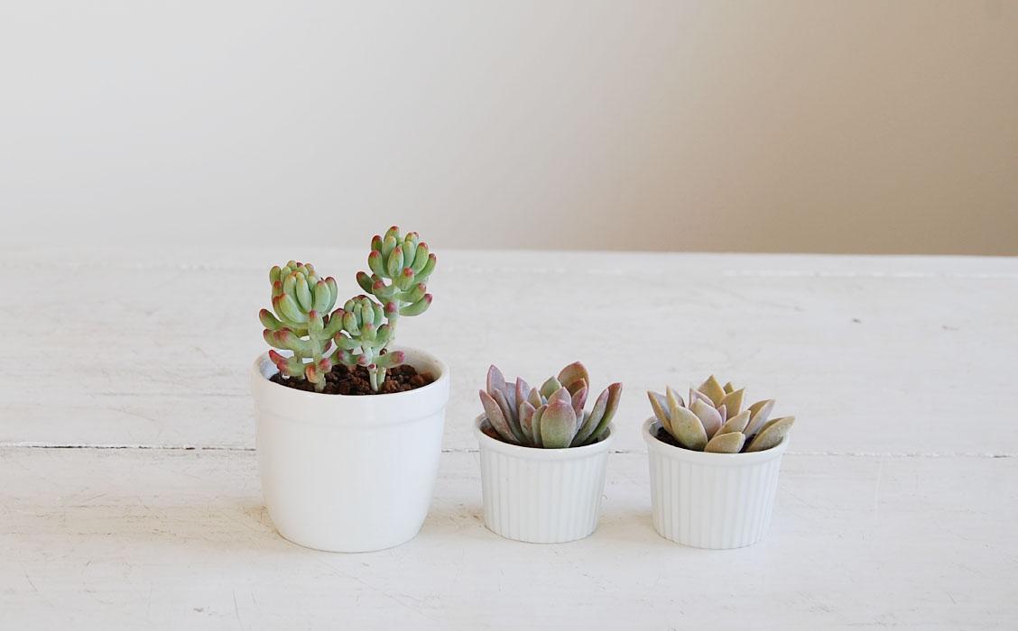 乙女な淡い色合いの多肉植物3鉢セット