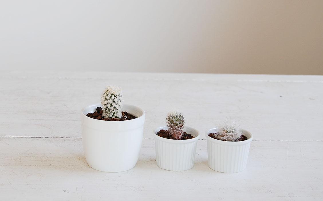 ふわふわか可愛い白いサボテン3鉢セット