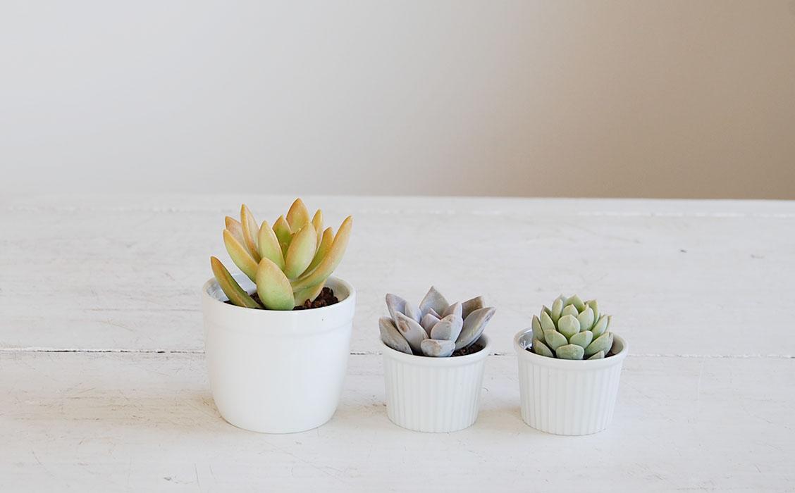優しい春色の色合い多肉植物3鉢セット