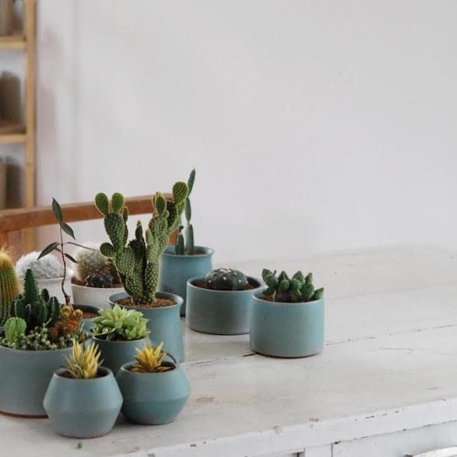 【新商品をご紹介しました。】・今回は青い器と貫入。リトープスの寄せ植えやコノフィツムの新しい仲間を紹介しました。是非ご覧くださいませ。・良い週末を#サボテン #サボテンのある暮らし #多肉植物 #多肉植物のある暮らし